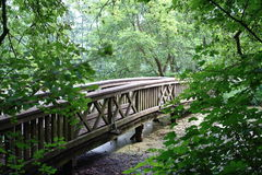 Wooden bridge. Over a lake in a forest royalty free stock images