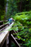 Wooden bridge. A wooden bridge in the forest, close to Lake 22, a popular hiking trail north of Seattle Stock Photography