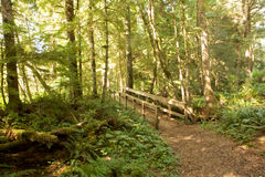 Wooden bridge. In a sunny forest Royalty Free Stock Photography