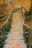 Wooden bridge Royalty Free Stock Photos