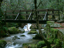 Wooden bridge. Autumn, background, bark, bridge, water, wood, wooden, green Stock Images