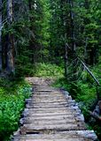 Wooden bridge. In green forest Royalty Free Stock Image