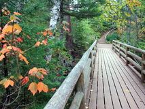 Wooden bridge. Wooden structure in Cascade river Minnesota state park Royalty Free Stock Photos
