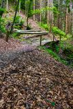 Wooden bridge above the brook in pine forest royalty free stock photography