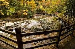 Wooden bridge. Above a stream in forest Stock Images