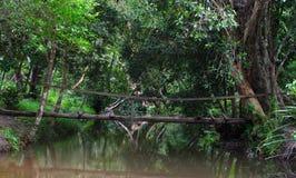 Wooden bridge across the stream Royalty Free Stock Photo