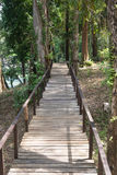 Wooden bridge along the forest. Of national park Royalty Free Stock Photo