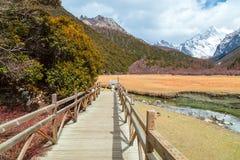 Wooden bridge along a path in the wilderness Stock Photos