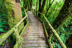 Wooden bridge at angka nature trail in doi inthanon national park Royalty Free Stock Image