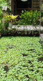 Wooden bridge with aquatic plant in pond Royalty Free Stock Image