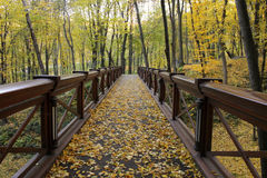 Wooden bridge in autumn forest. Wooden bridge in the autumn forest Stock Image