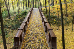 Wooden bridge in autumn forest Stock Image