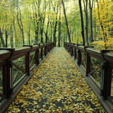 Wooden bridge in the autumn forest Stock Images