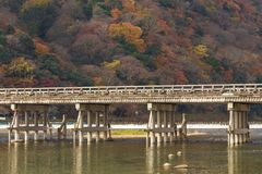 Wooden bridge with autumn multiple colours tree background Stock Image