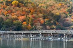 Wooden bridge with autumn season mountain background, Kyoto Japan. Natural landscape background Stock Images