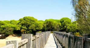 Wooden bridge on the beach of Puerto Real in Cadiz Royalty Free Stock Photos