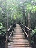 Bridge towards the Jozani Forest mangroves royalty free stock photos
