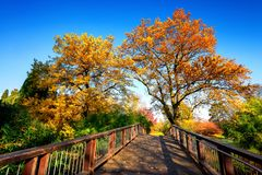 Wooden bridge in a colorful autumn scene Stock Photography