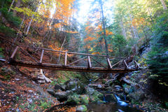 Wooden bridge in colorful forest Stock Images