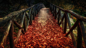 Wooden bridge covered with autumn leaves. Old wooden bridge covered with autumn leaves Stock Photography