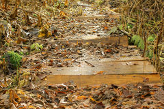 The wooden bridge covered with the fallen down grass in the autu Royalty Free Stock Images