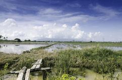Wooden bridge crossing the canal and paddy field Stock Photography