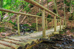 Wooden bridge disappears in forest. Wooden bridge disappearing into the depths of forest Royalty Free Stock Image