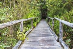 Wooden bridge at Doi Inthanon National Park Stock Image