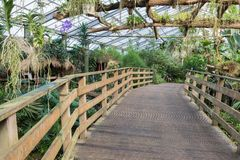 Wooden bridge in a Dutch greenhouse with tropical garden Stock Photo