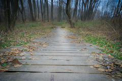 Wooden bridge with fallen leaves. Autumn landscape. Stock Photo