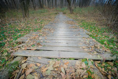 Wooden bridge with fallen leaves. Autumn landscape. Stock Images