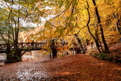 Wooden Bridge with Fallen Leaves over Lake Royalty Free Stock Photo