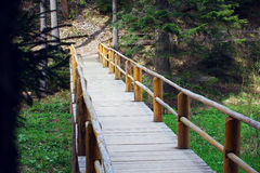 Wooden bridge fenced by a fence in a pine forest Royalty Free Stock Image