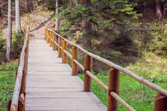 Wooden bridge fenced by a fence in a pine forest Royalty Free Stock Photos