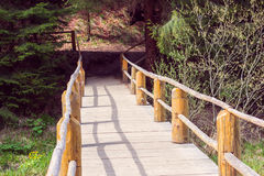 Wooden bridge fenced by a fence in a pine forest Stock Image