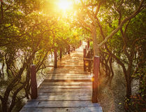 Wooden bridge in flooded rain forest jungle of mangrove trees Stock Images