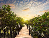 Wooden bridge in flooded rain forest jungle of Stock Image