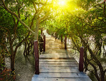Wooden bridge in flooded rain forest jungle of Royalty Free Stock Photos