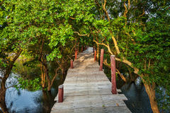 Wooden bridge in flooded rain forest jungle of Stock Photo