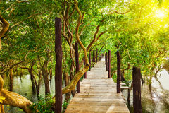 Wooden bridge in flooded rain forest jungle of Stock Images