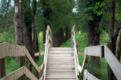 Wooden bridge in a forest Stock Photos
