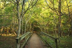 Wooden Bridge In Forest Royalty Free Stock Photography