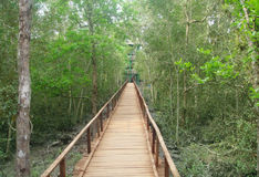 Wooden bridge through a forest stock photography