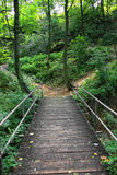 Wooden bridge in a forest Royalty Free Stock Photo