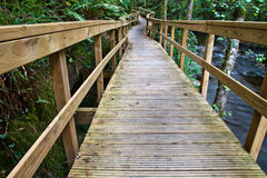 Wooden bridge in the forest Stock Image