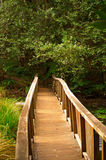 Wooden bridge in forest. Wooden bridge through forest on a path royalty free stock photos
