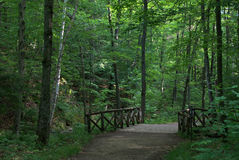 Wooden Bridge In The Forest Royalty Free Stock Images