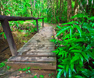 Wooden bridge in the forest Royalty Free Stock Photos