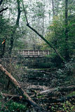 Wooden bridge. In a forest in autumn stock image