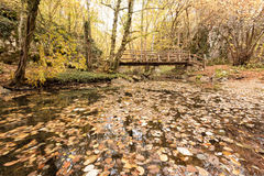 Wooden bridge in the forest. Autumn colorful landscape. Strandja mountain, Bulgaria during autumn. Stock Images